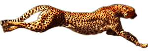 like-a-cheeta-hot-shot-delivery