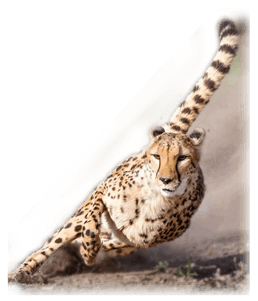 about-like-a-cheetah-courier-services